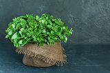 Brown pot of mint on gray background