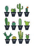 Cute cactus set, vector illustration
