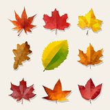 Set of Nine Vector Low Poly Autumn Leaves
