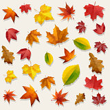 Yellow Orange Red Flying Autumn Leaves Vector Background