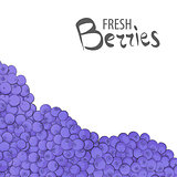 Delicious blueberries on white