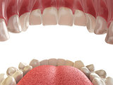 Teeth or dentures. Open human mouth upper and lower jaw.