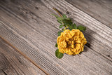 Yellow rose on wooden background