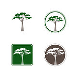 Acacia Tree Logo Design Set