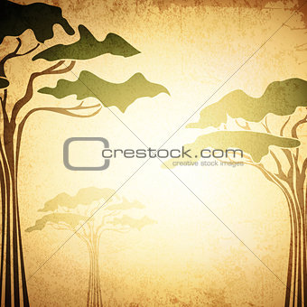 Africa Abstract Acacia Tree Background
