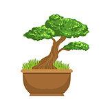 Bonsai Japanese Culture Symbol