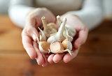 woman hands holding garlic