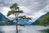 Lonely tree and Norwegian fjord landscape.
