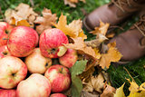 woman feet in boots with apples and autumn leaves