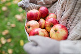 woman with apples at autumn garden