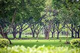Fresh green park