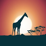 Orange evening savanna scenery with giraffe