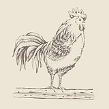 Rooster standing on a tree branch