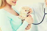 close up of vet with stethoscope and cat at clinic