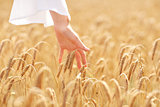 close up of woman hand in cereal field