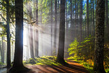 Sunbeams along Hiking Trails