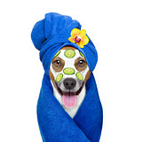 wellness beauty mask  spa  dog
