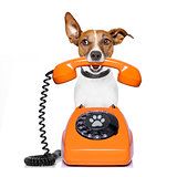 dog on the phone