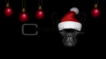 christmasn santa claus  dog on black backgroud