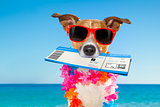 chek in boarding pass summer dog