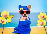 wellness beauty   spa  dog