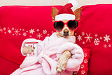 dog spa wellness christmas holidays