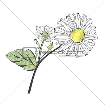 Branch of Daisy Flower
