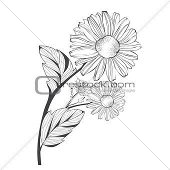 Branch of Daisy Flower