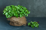 Brown pot and sheaf of mint on gray background