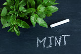 "Mint leaves and the word ""mint"" on the chalkboard"