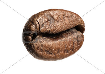 close up of coffee bean isolated