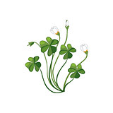 Shamrock Wild Flower Hand Drawn Detailed Illustration