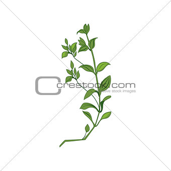 Green Wild Plant Hand Drawn Detailed Illustration
