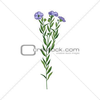 Flax Wild Flower Hand Drawn Detailed Illustration