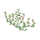 Tiny Pink Wild Flower Hand Drawn Detailed Illustration