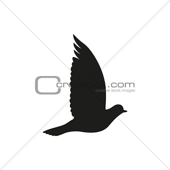 Post pigeon or dove . Vector illustration.