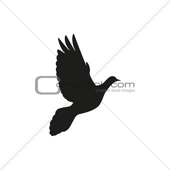 Single pigeon love silhouettes