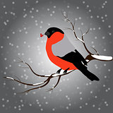 bullfinch sitting on branch with a twig of Rowan in its beak, snowfall. Winter or christmas vector illustration
