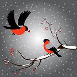 Bullfinch on rowan branch, snow, merry christmas, gray background. Winter vector illustration.