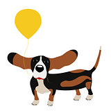 dog Basset Hound with a balloon isolated on white background.