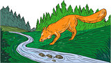 Fox Drinking River Woods Creek Drawing