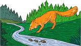 Fox Drinking River Woods Creek Drawing
