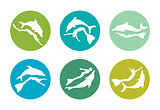 Collection of silhouette freediver and dolphin. Freediving icons