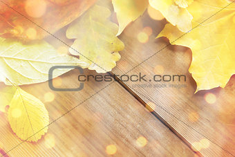 close up of many different fallen autumn leaves