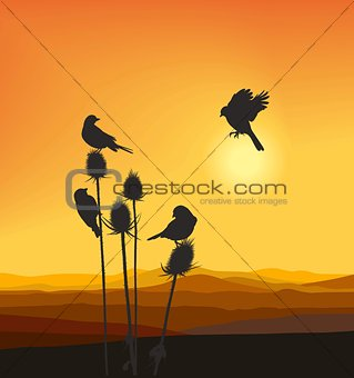 Small birds on a thistle