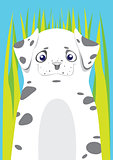 Dalmatian in the grass on blue background