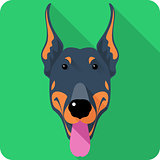 Vector dog Doberman Pinscher icon flat design