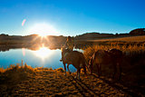 Woman with Two Horses by a Lake at Sunset