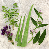 Fresh Herbs for Skin Care