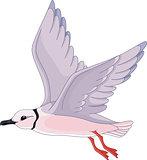 Gull pink